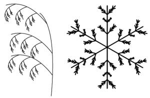snowflakegrass