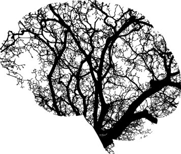 Brain anatomy - a black and white graphic of branches in the brain based on a tree